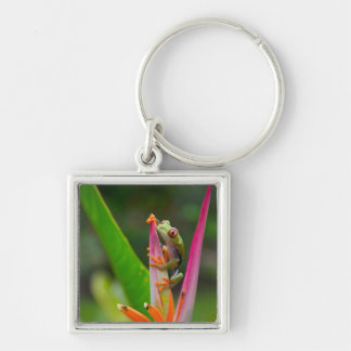 Red-eye tree frog, Costa Rica 2 Key Chains