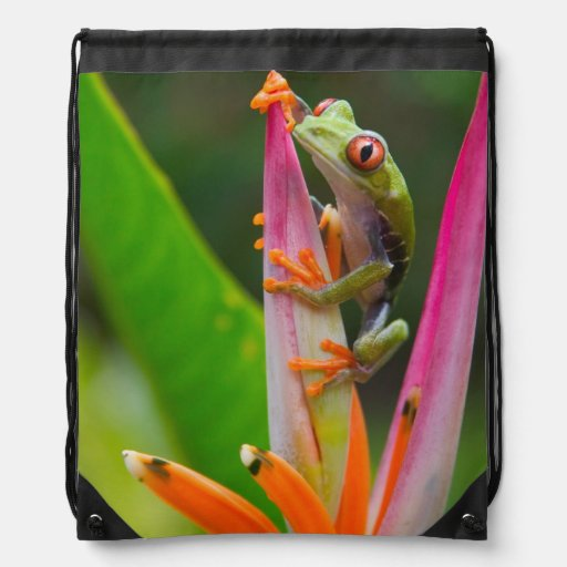 Red-eye tree frog, Costa Rica 2 Drawstring Bags