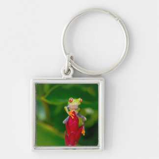 Red-eye tree frog, Costa Rica Silver-Colored Square Keychain