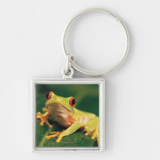 Red eye tree frog Silver-Colored square keychain