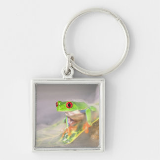 Red Eye Treefrog in the mist, Agalychinis Silver-Colored Square Keychain