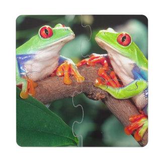 Red Eye Treefrog Pair, Agalychinis callidryas, Drink Coaster Puzzle