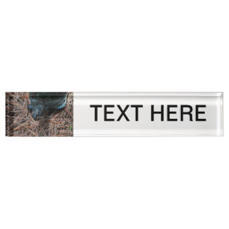 red eyed box turtle reptile animal name plate