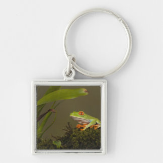 Red-eyed Leaf Frog, AKA Red-eyed Tree frog Silver-Colored Square Keychain