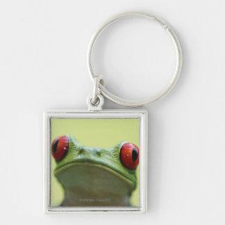 Red-eyed tree frog (Agalychnis callidryas) 2 Key Chains