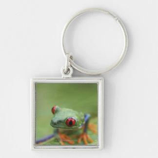 Red-eyed tree frog (Agalychnis callidryas) Keychain
