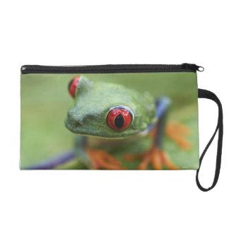 Red-eyed tree frog (Agalychnis callidryas) Wristlet Purse
