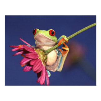 red eyed tree frog announcements
