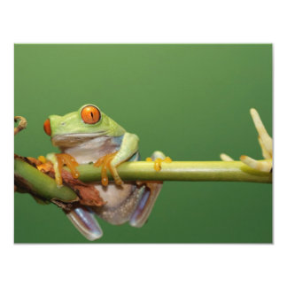 red eyed tree frog personalized announcements