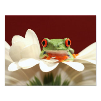 red eyed tree frog custom announcements