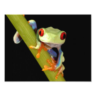 red eyed tree frog personalized announcement