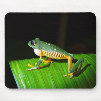 Red-Eyed Tree Frog Photography Mouse Pad