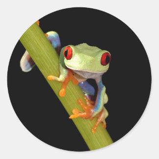 red eyed tree frog round sticker