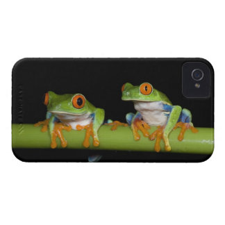 Red-eyed Tree Frogs (Agalychnis callidryas) Case-Mate iPhone 4 Cases