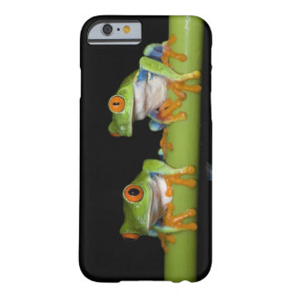 Red-eyed Tree Frogs (Agalychnis callidryas) on Barely There iPhone 6 Case