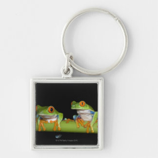 Red-eyed Tree Frogs (Agalychnis callidryas) on Silver-Colored Square Keychain