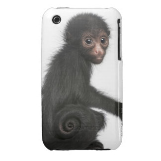 Red-faced Spider Monkey - Ateles paniscus (3 iPhone 3 Covers