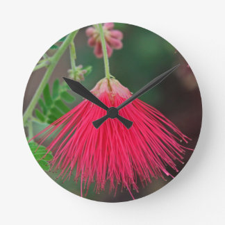Red Fairy Duster Clocks