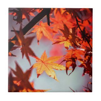 Red Fall Autumn Leaves Maple Tree Tile