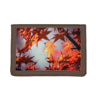 Red Fall Autumn Leaves Maple Tree Tri-fold Wallets