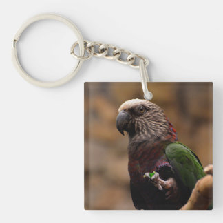 Red Fan Parrot Single-Sided Square Acrylic Keychain