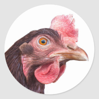 Red Feathered Chicken Egg Layer Hen Classic Round Sticker