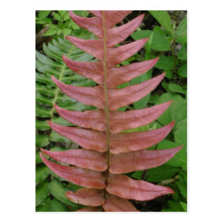 Red Fern Postcard