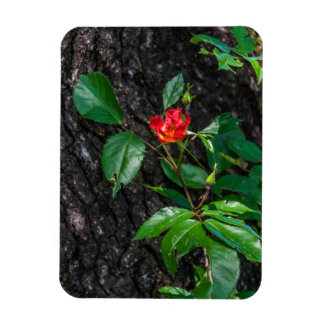 Red flower blossoming fridge magnet