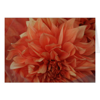 Red Flower card *Blank
