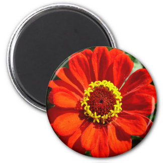 Red Flower Circle 2 Inch Round Magnet