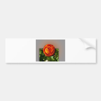Red flower coming out of frame bumper sticker