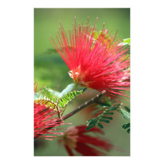 Red Flower Explosion Custom Stationery