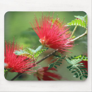 Red Flower Explosion Mouse Pad