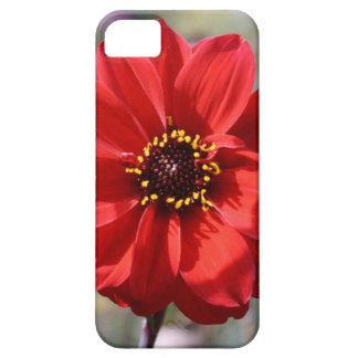 Red Flower iPhone 5 Cases