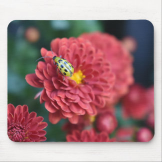 Red Flower Nature Photography Beetle Insect Bug Mouse Pad