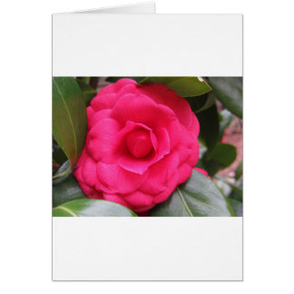 Red flower of Camellia japonica Rachele Odero Card