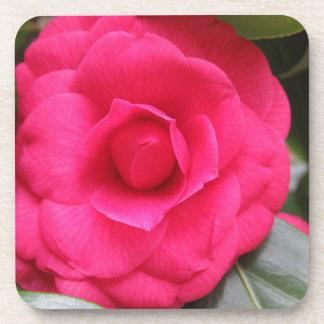 Red flower of Camellia japonica Rachele Odero Coaster