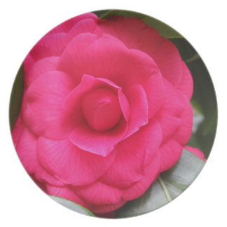 Red flower of Camellia japonica Rachele Odero Plate