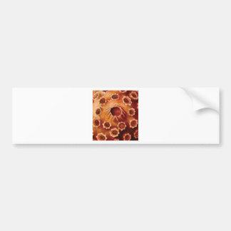 red flower ruptures bumper sticker