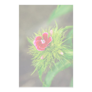 Red flower stationery