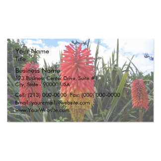 Red flowers against blue sky wit white clouds pack of standard business cards