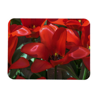 Red flowers fridge magnet