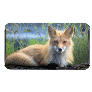 Red fox beautiful photo portrait, gift iPod touch covers