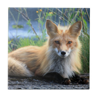 Red fox beautiful photo portrait tile, trivet gift