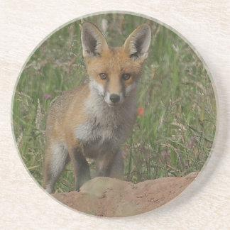 Red Fox Coaster