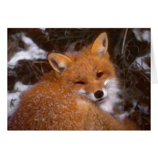 """Red Fox"" Greeting Card"