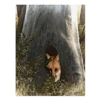 Red Fox in a Tree Gifts and Apparel Postcard