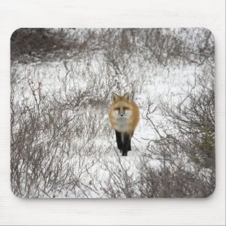 Red Fox in Churchill Manitoba Canada Mouse Pad