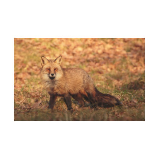 Red fox in the late afternoon canvas print