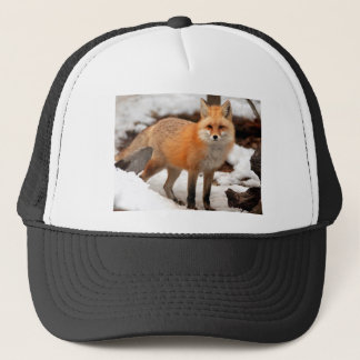 Red fox in the snow trucker hat